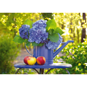 Watering can with Hortensia