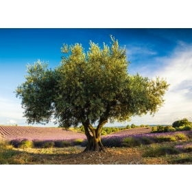 "Pusle ""Olive Tree in Provence"" 1000 tk"